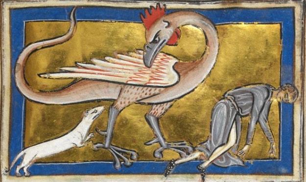 """Fig. 3 - Il basilisco, creatura mostruosa che si voleva generata da un uovo deposto da un gallo anziano, ma covato da una bestia velenosa come il rospo, l'aspide o il drago. Figura ibrida, ha la testa, le ali e le zampe di un gallo, ma il corpo termina a forma di serpente. È sormontato da una cresta carnosa simile ad una corona (da cui il nome che significa """"piccolo re""""). È il """"re dei serpenti"""" e tutti lo temono, tranne la donnola, come si vede in questa splendida miniatura. Londra, British Library, Royal MS 12 C XIX, fol. 63r."""