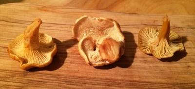 Alaskan Mushrooms