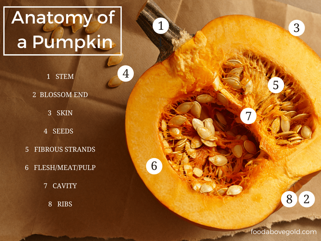 Want to start cooking with fresh pumpkins at home learn the anatomy of a pumpkin