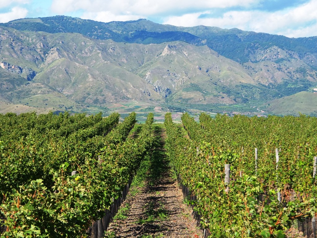 10 Sicilian wine producers to look out for