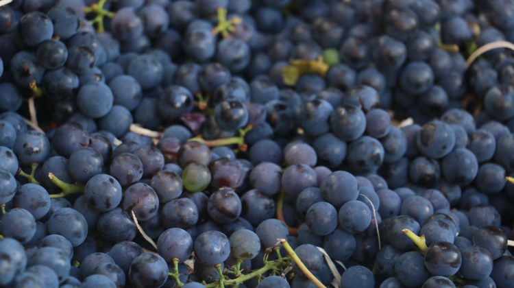 Weekly roundup of great reads on food and wine #92