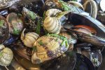 Shellfish Barraca