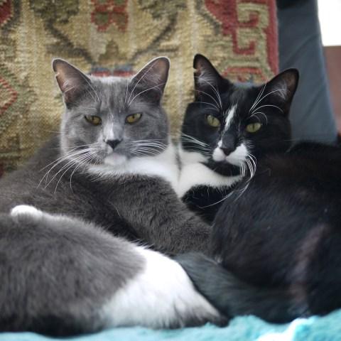 a regal looking duo