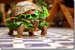 turtle_burger