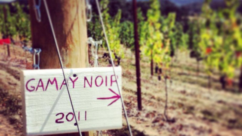 Around The World In 80 Wine Varietals: Gamay