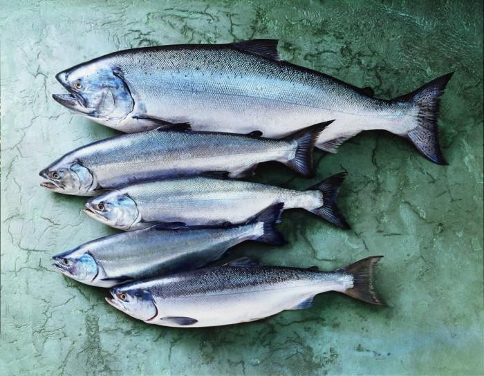 Wild Alaska Seafood