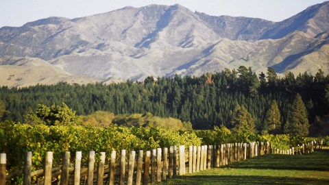 Picturesque mountains frame the world-renowned vineyards of Marlborough.