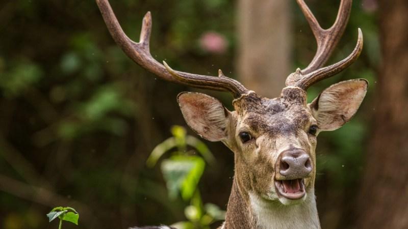 Oh deer, look what's for dinner. (Photo: 80194038@N00/Flickr.)