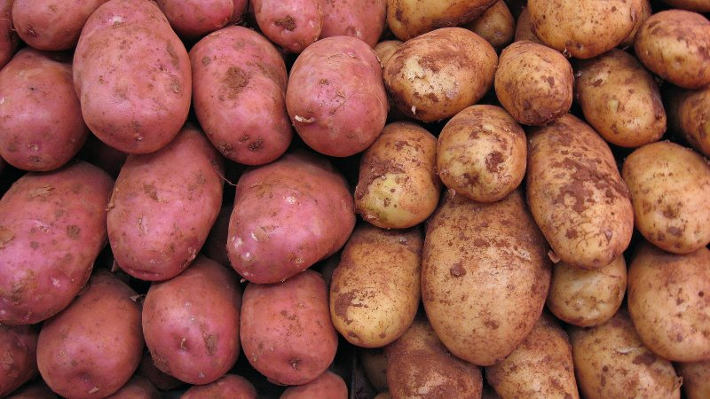 The FDA says GMO potatoes are all safe to eat. (Photo: 16:9clue/Flickr.)
