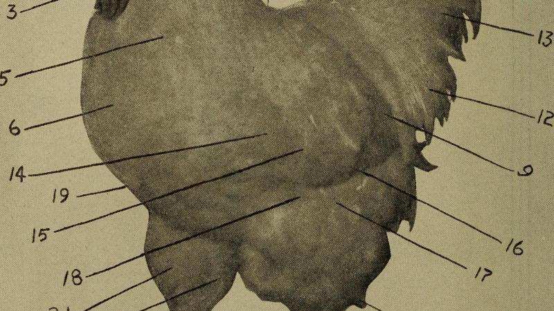 PoultryDiagram