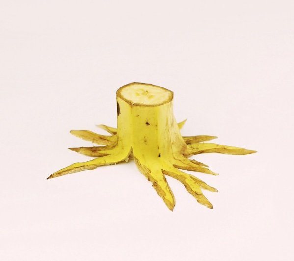 Banana tree stump