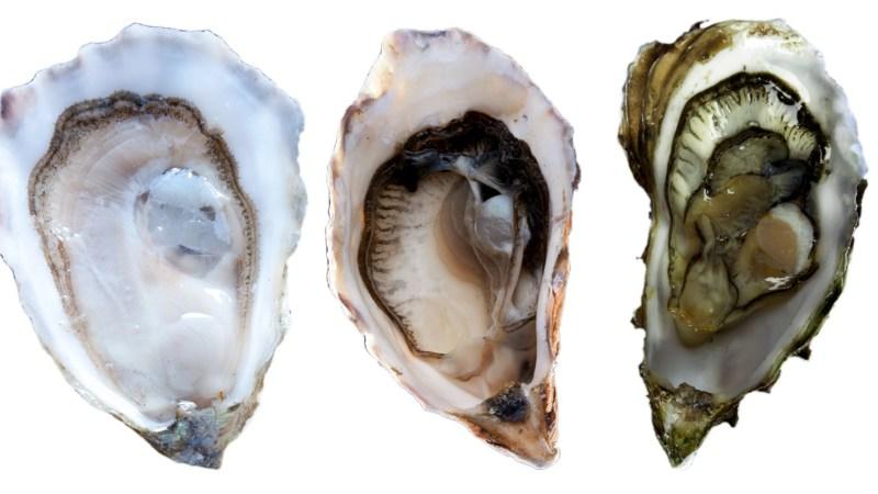 OysterTrio