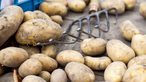 World's oldest mashed potatoes