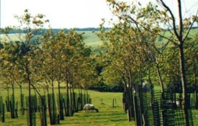 agroforestry-350x220 (Custom)