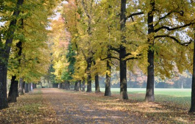 parco-di-monza-autunno-mb-580x300