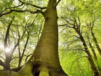 foresta-foreste-bosco-boschi-albero-alberi-keller-fotolia-750x504