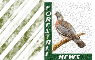 forestalinews(Custom)