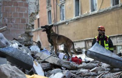 A dog on rubble of a building collapsed in Amatrice, central Italy, where a 6.1 earthquake struck just after 3:30 a.m., Italy, 24 August 2016. The quake was felt across a broad section of central Italy, including the capital Rome where people in homes in the historic center felt a long swaying followed by aftershocks. ANSA/ MASSIMO PERCOSSI