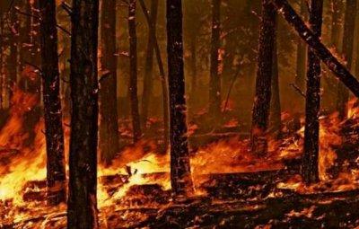incendi-boschivi-2463