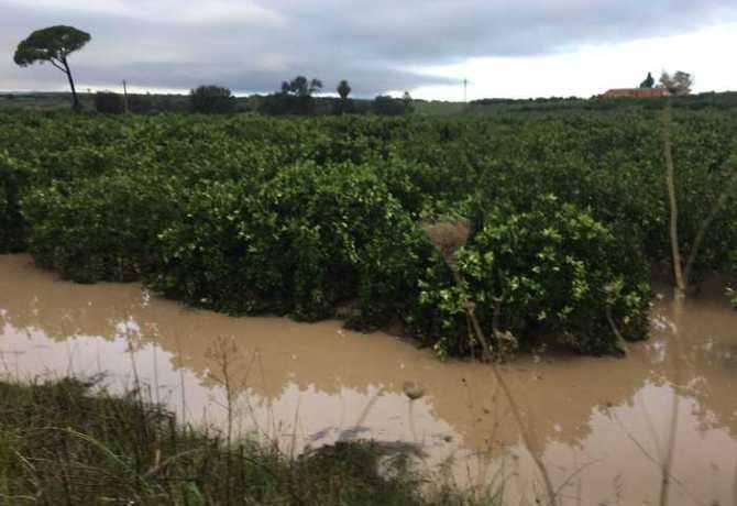 Maltempo: Coldiretti Sicilia, devastati agrumeti e ortaggi