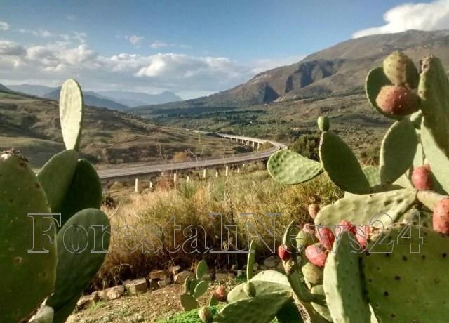 Autostrade Siciliane. Musumeci spinge l'Anas nel dare risposte celeri !