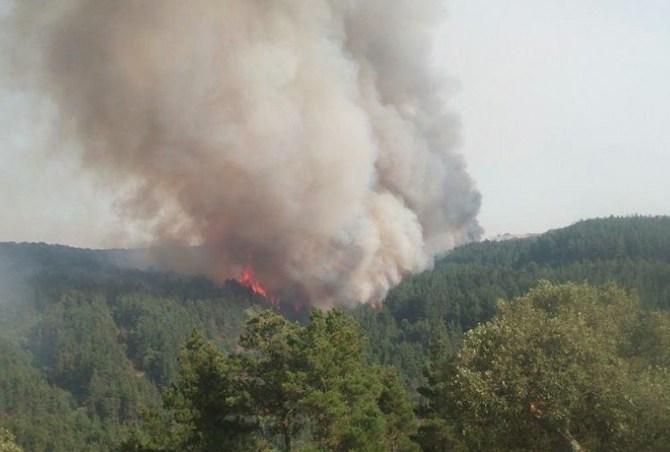 Incendi a raffica in Sicilia. Il governo regionale preferisce le promesse alle certezze