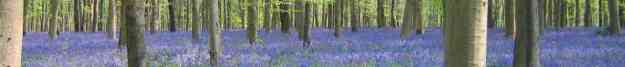 cropped-cropped-forest-image-header.jpg