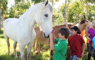 Daniel Kitch puts a halter on D'Artagnan, an 18-hand white Percheron, at Wai Koa Plantation in Kilauea, Kaua'i's North Shore. D'Artagnan is the tallest horse on the island, according to Marti Kitch, owner of Carriage Grove Kaua'i.