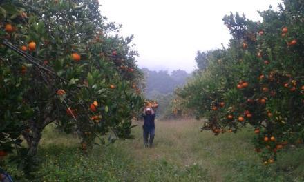 Lluvias recientes beneficiaron al Campo