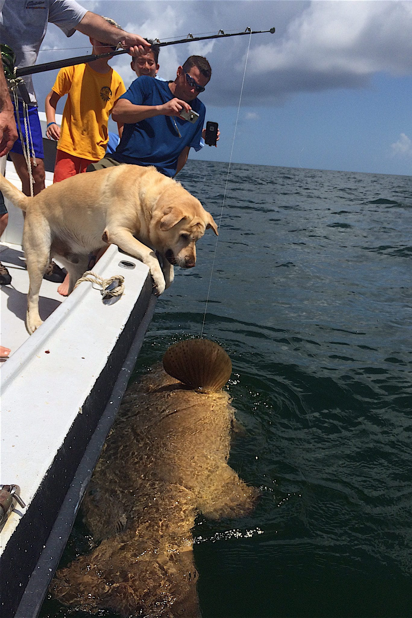Fort myers fishing goliath grouper july 7 2016 fort for Fort myers fishing