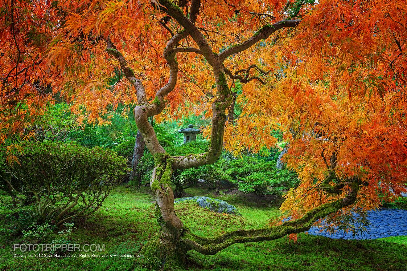 Adirondack Fall Wallpaper How To Shoot Portland Japanese Garden Fototripper
