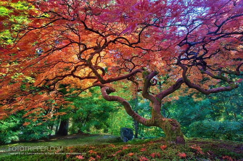 Beautiful Fall Location Wallpapers How To Shoot Portland Japanese Garden Fototripper