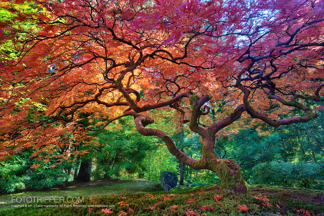 Portland Or Fall Had Wallpaper How To Shoot Portland Japanese Garden Fototripper