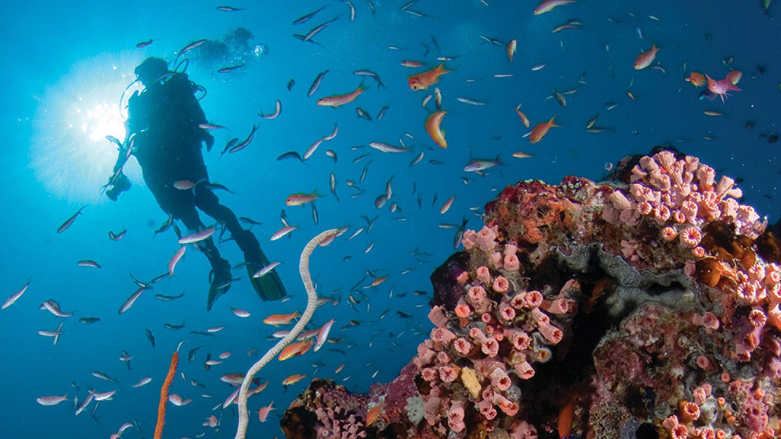 Mlg Hd Wallpaper Maldives Diving Scuba Diving Four Seasons Landaa Giraavaru