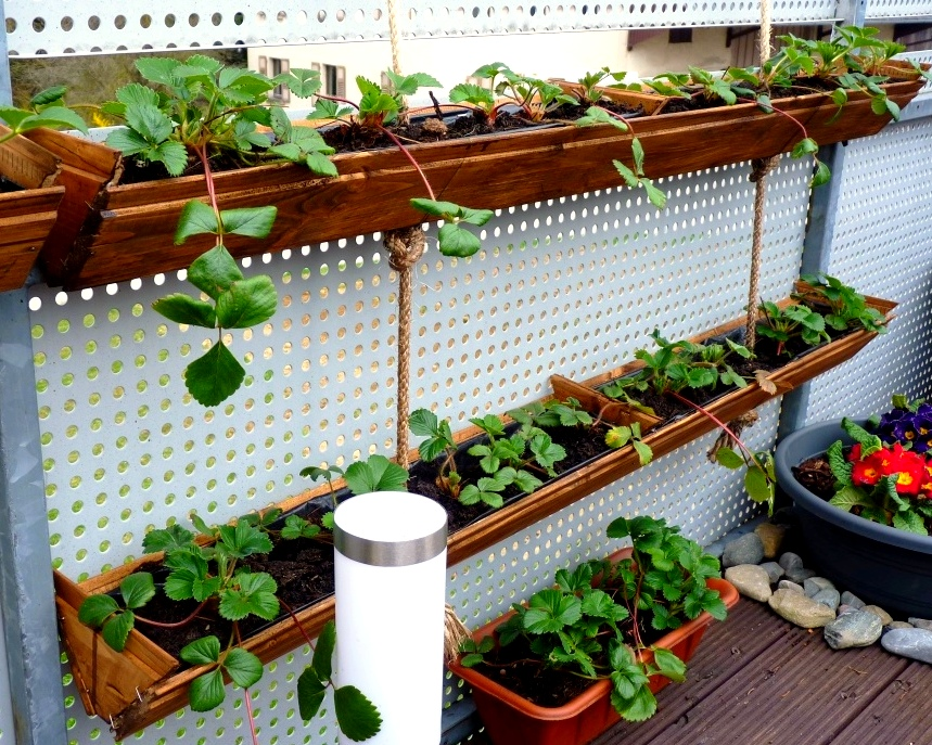 Container Gardening : Diy Strawberry Planter -Easy And Unexpensive