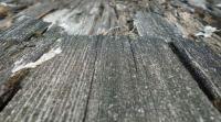 Morsches Holz ausbessern