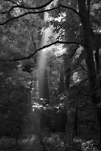 Into the Forest, Dark and Deep