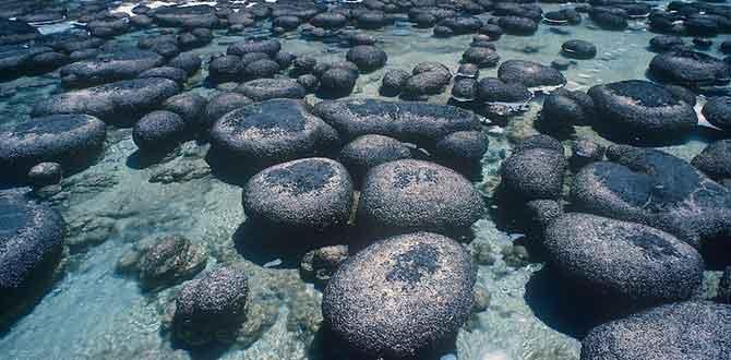 stromatolites670
