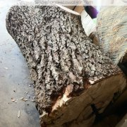 Jeweler's Oak Stump