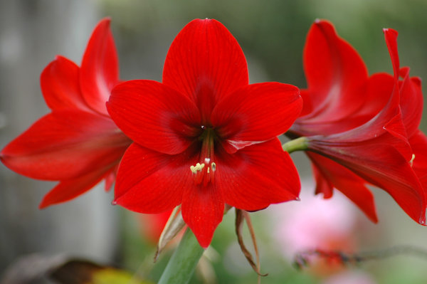 Live Wallpaper Fall Leaves Amaryllis Frankie Flowers Grow Eat Live Outdoors