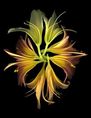Lily Kaleidoscope