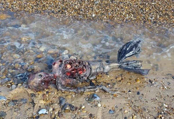 Grim mermaid washes ashore in Virginia