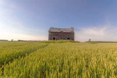 Abandoned Ontario House in Wheat Field
