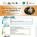 vignette-fiche_abricot_charite
