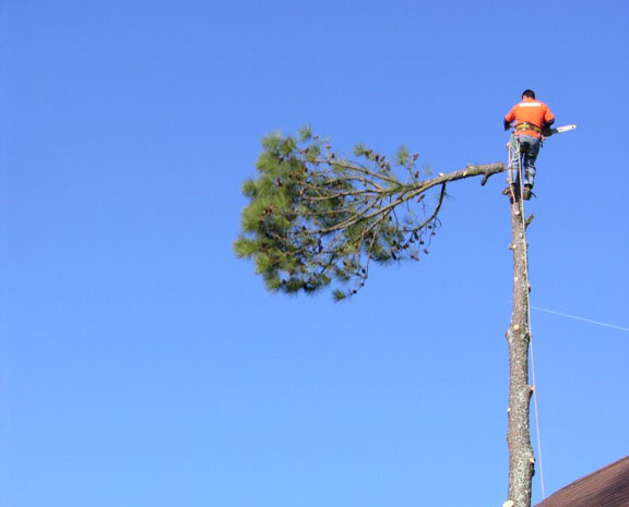 Knoxville Tree Topping - Fred\u0027s Tree Service