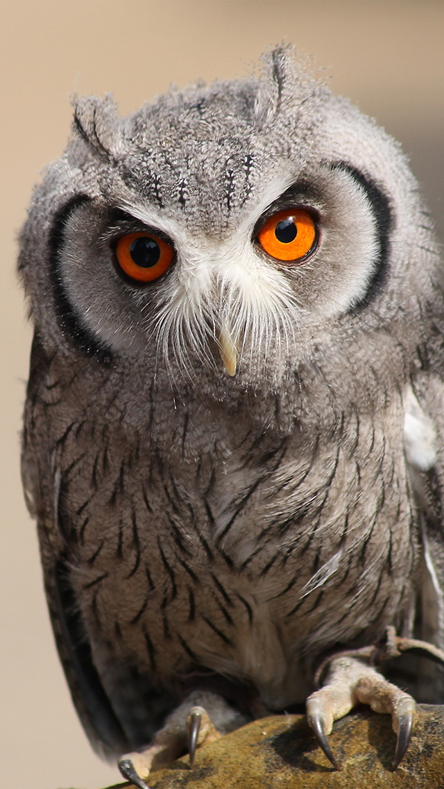 Apple Iphone 4s 3d Wallpapers Cute Owl Iphone 6 6 Plus And Iphone 5 4 Wallpapers
