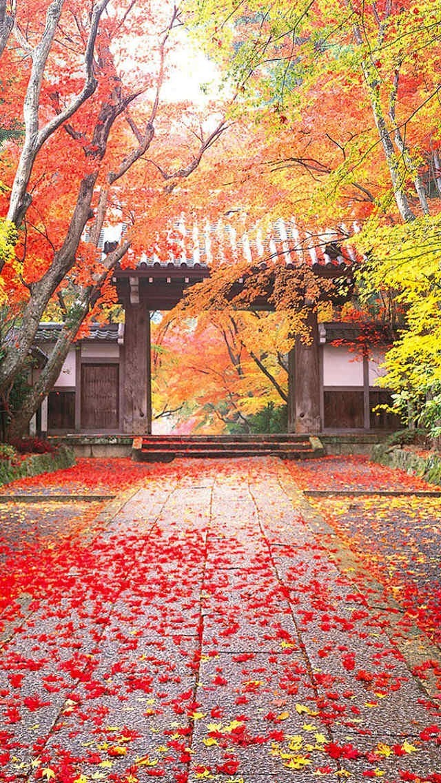 Falling Maple Leaves Wallpaper Maple Leaves And Chinese Style Ancient Architecture