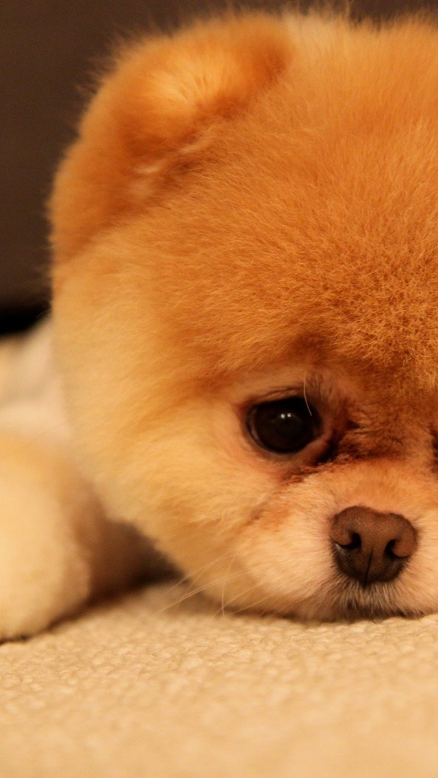 Sad Love 3d Wallpaper Sad Puppy Iphone 6 6 Plus And Iphone 5 4 Wallpapers