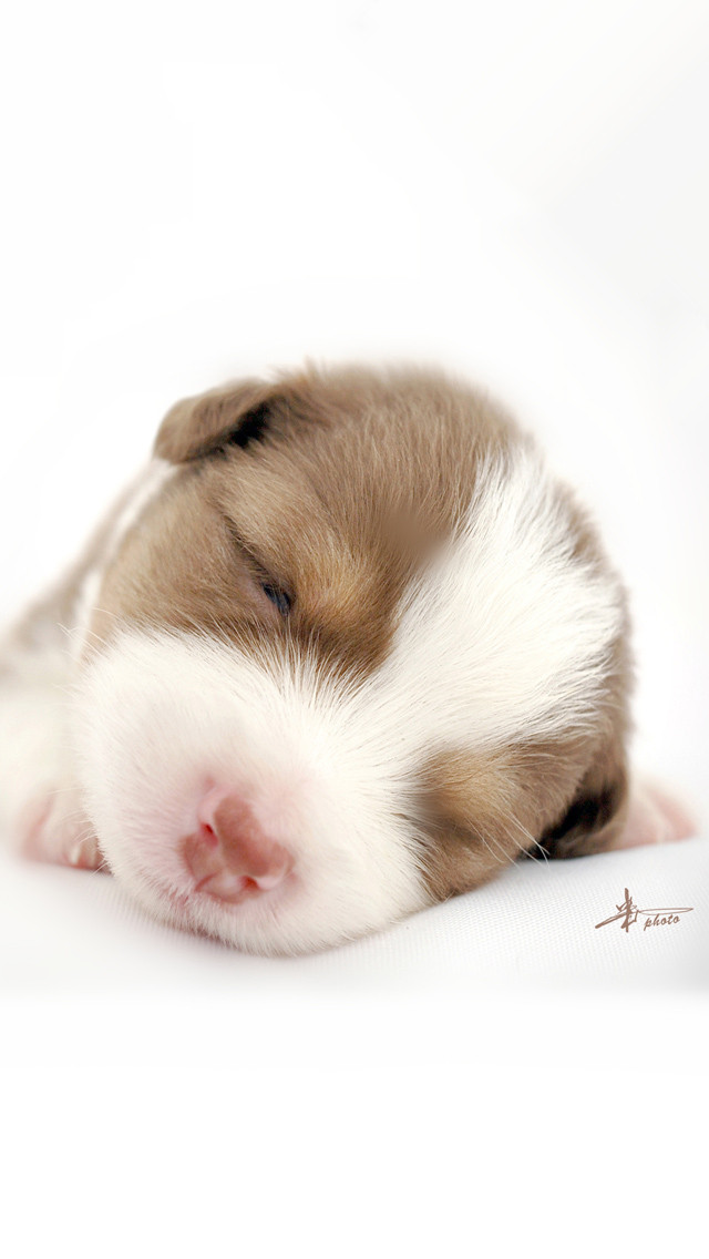 Cute Little Baby Girl Wallpapers Sleeping Baby Dog Iphone 6 6 Plus And Iphone 5 4 Wallpapers
