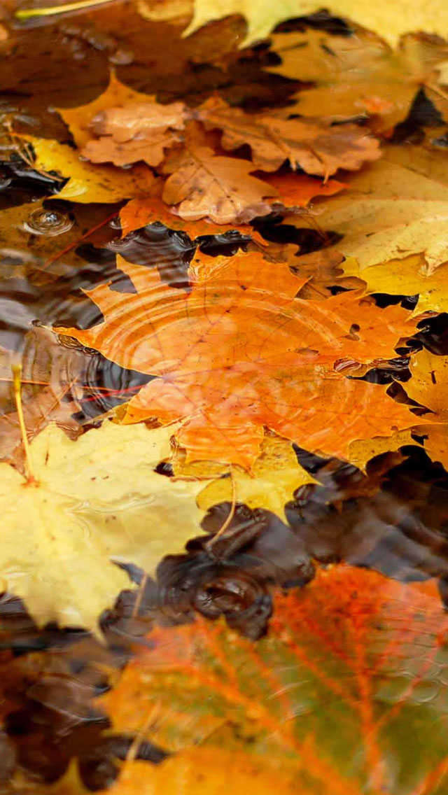 Free 3d Snow Falling Wallpaper Autumn Yellow Maple Leaves On The River Wallpaper Free
